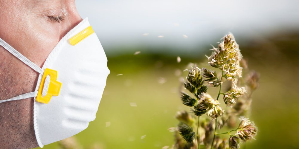 Flowering grasses that are the cause of many allergies
